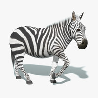 zebra fur rigged 3d model
