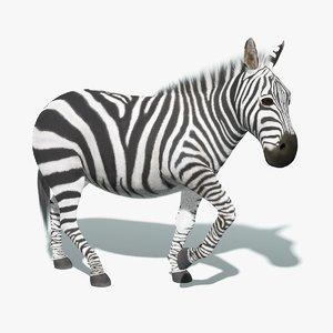 max zebra fur rigged animation