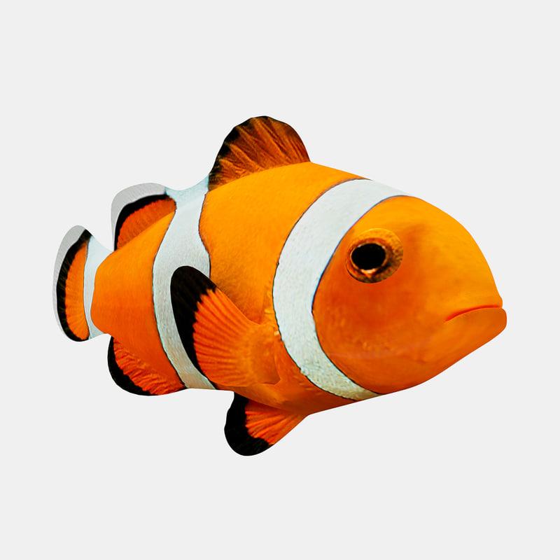 3d fish clownfish clown
