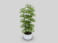 obj potted umbrella tree