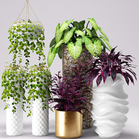 plants pots max