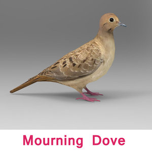 mourning dove 3d 3ds