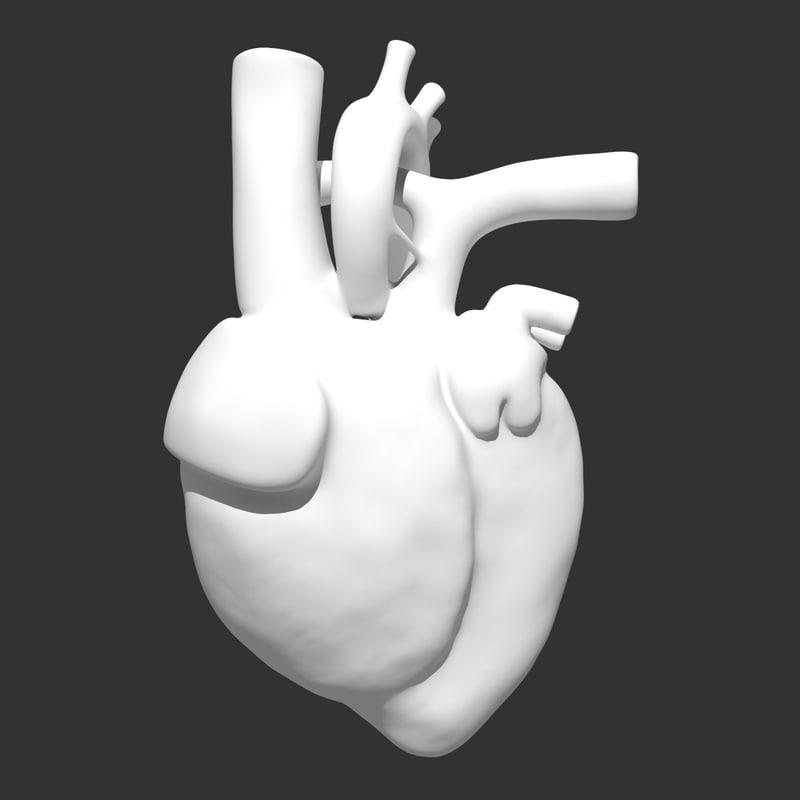 max heart anatomy