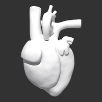max heart anatomy