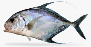 threadfin jack 3d model