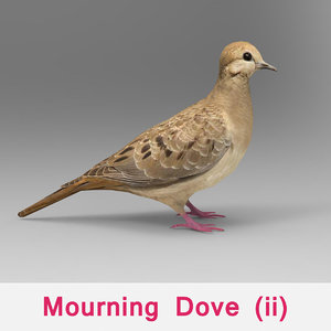 mourning dove max