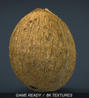 3d model coconut