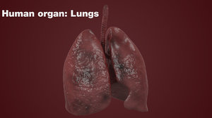 realistic human lungs max