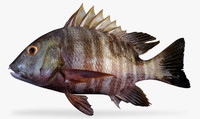 3d barred pargo model