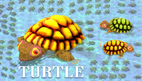 Animated Turtle