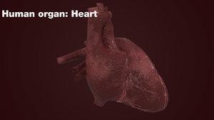 realistic human heart 3d max