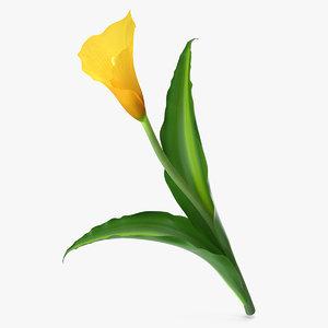 3d model yellow calla flower