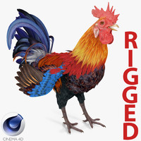 Rooster Rigged for Cinema 4D