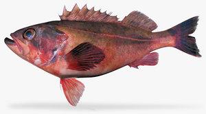 mexican rockfish 3d model