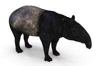 tapir 3d max