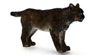 3d lynx bobcat model