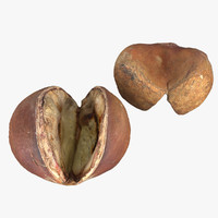 3d cooked chestnut model