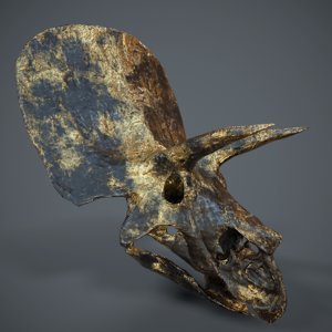 stylized triceratops skull 3d model