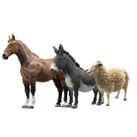 Animals Collection (Horse/Donkey/Sheep)
