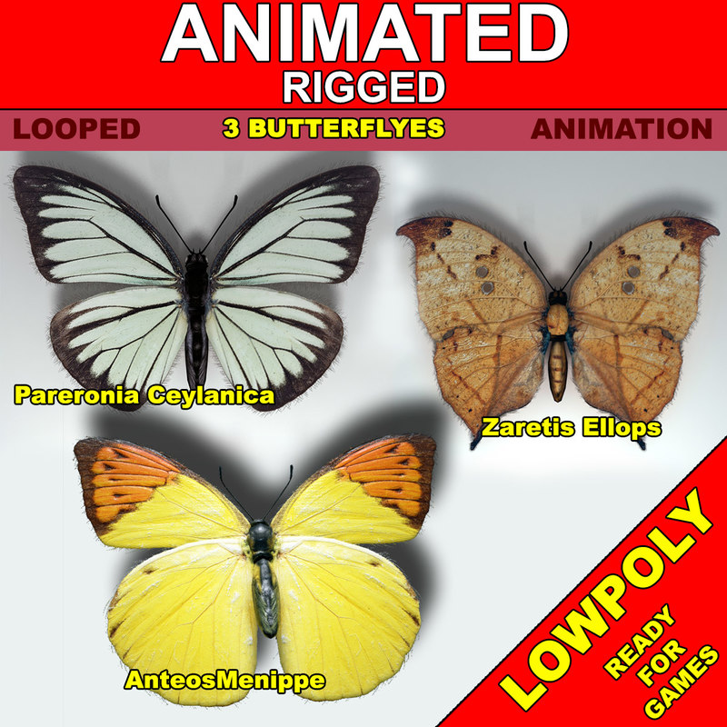 butterfly fly x