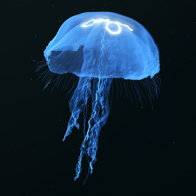 3d blue jellyfish model