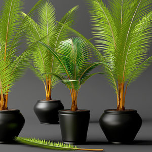 coconut palm set 3d max