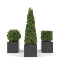 boxwood - set 2 3d max