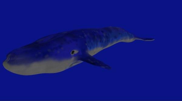whale 3d obj