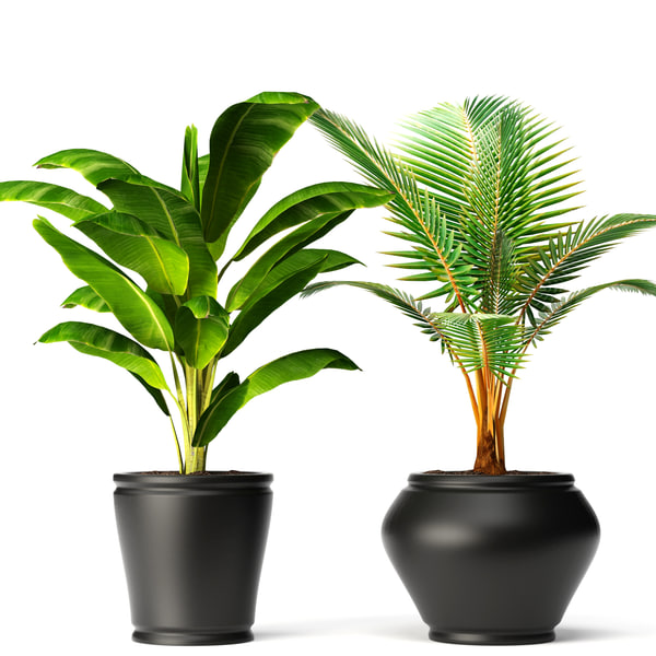 coconut palm set banana tree 3d model