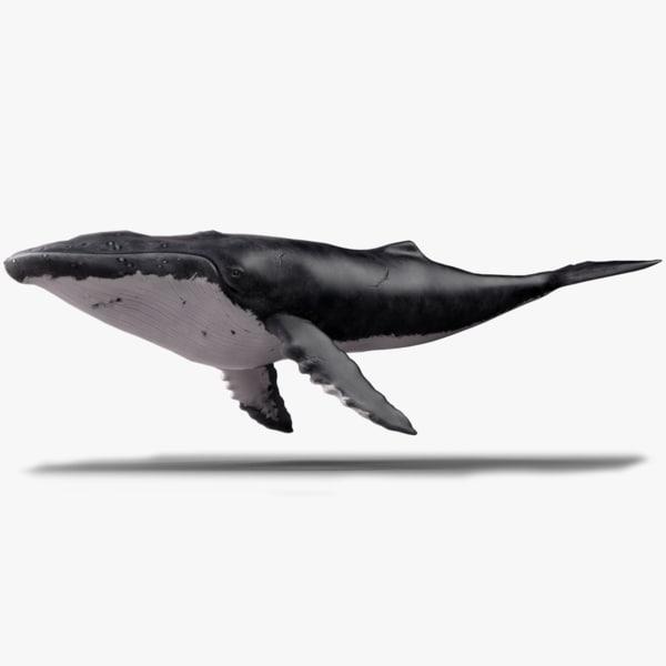 obj humpback whale - megaptera