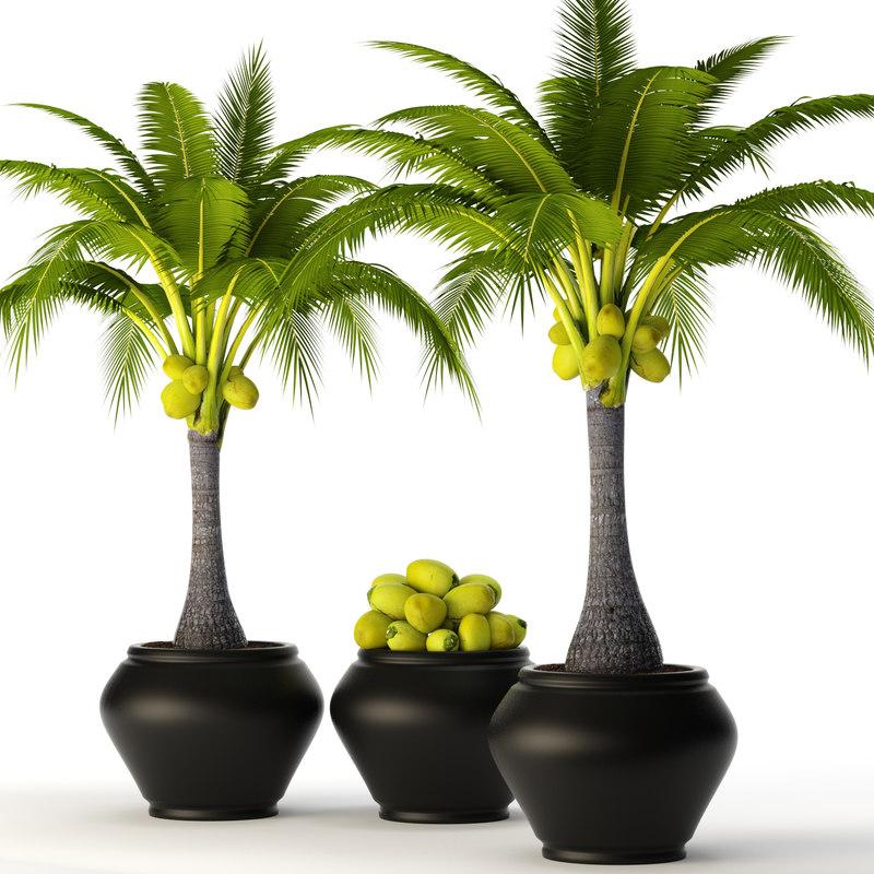 max coconut palm set