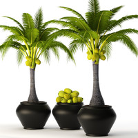 Coconut palm set