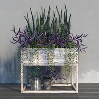 Terrace plants 2