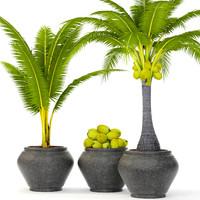 Coconut palm set(1)