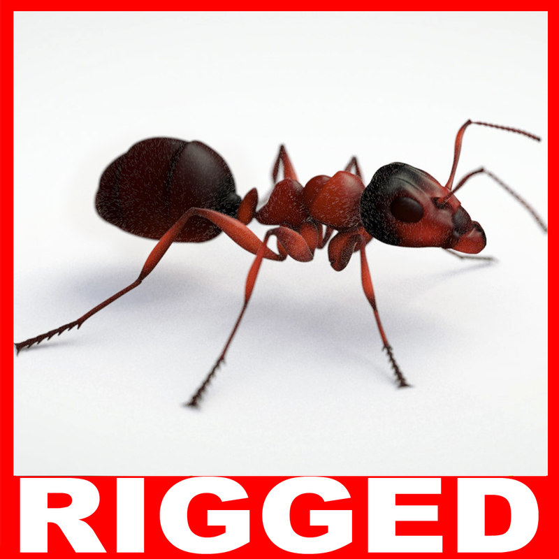3d model ant rigged