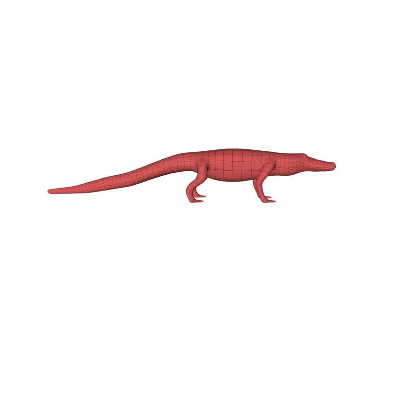 base mesh alligator 3d model
