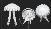 3d model jellyfish highpoly