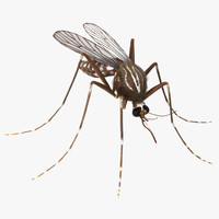 Mosquito with Fur 3D Model