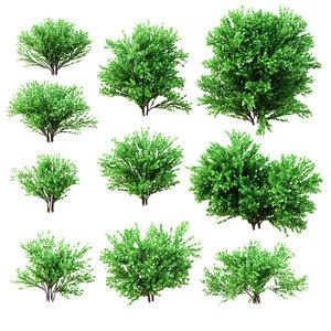 3d model set deciduous shrubs 10