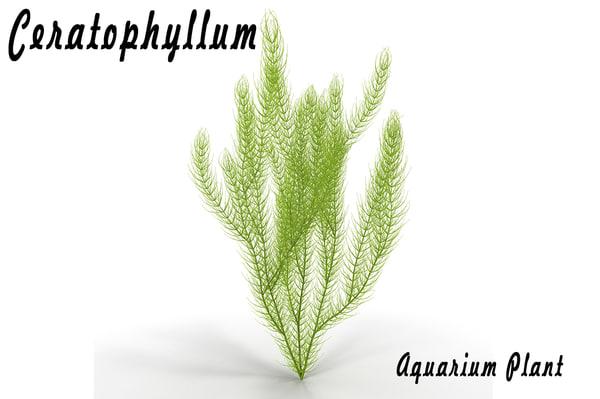 3d ceratophyllum aquarium plant