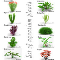 Set of aquarium plants