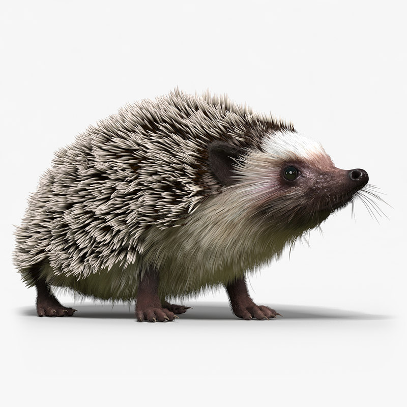 3d hedgehog fur rigged