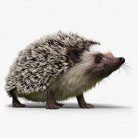 Hedgehog(FUR)(RIGGED)