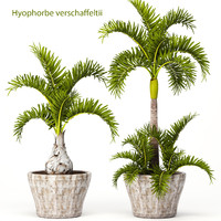 3d hyophorbe lagenicaulis set model