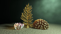 Anemone and Coral