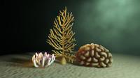3d ocean coral anemone model