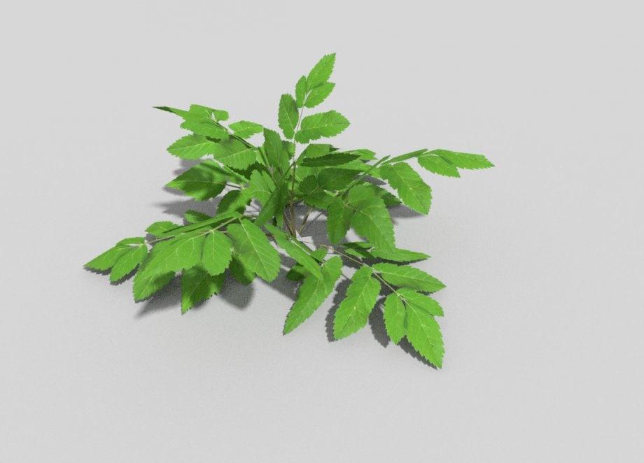 plant games obj