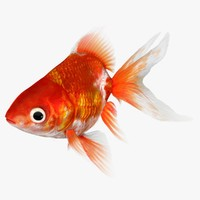 3d model ryukin goldfish