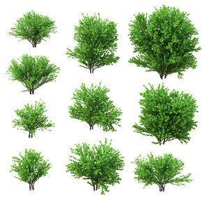 max set 10 shrubs