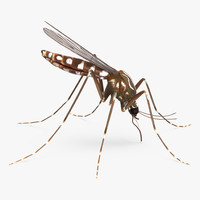 3d model mosquito sucking blood